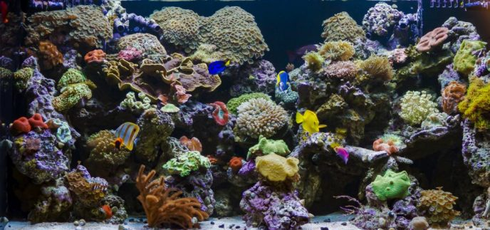 Professional Aquarium Services Los Angeles