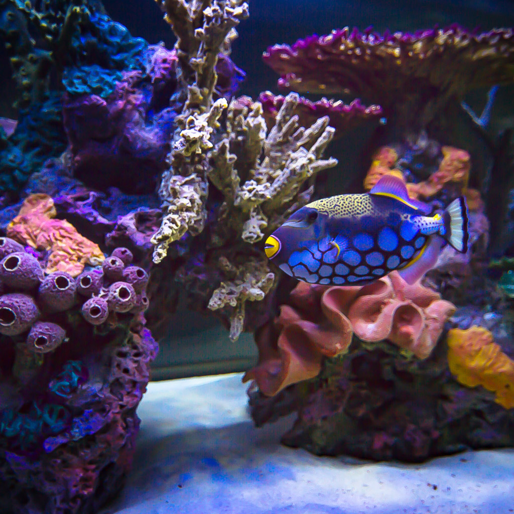 Types of Aquariums - Coral Insert