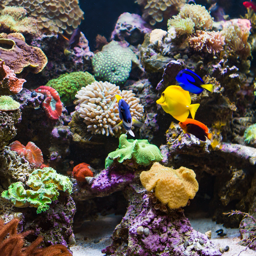 Types of Aquariums - Living Reef