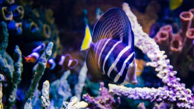 Aquarium Maintenance Scheduling
