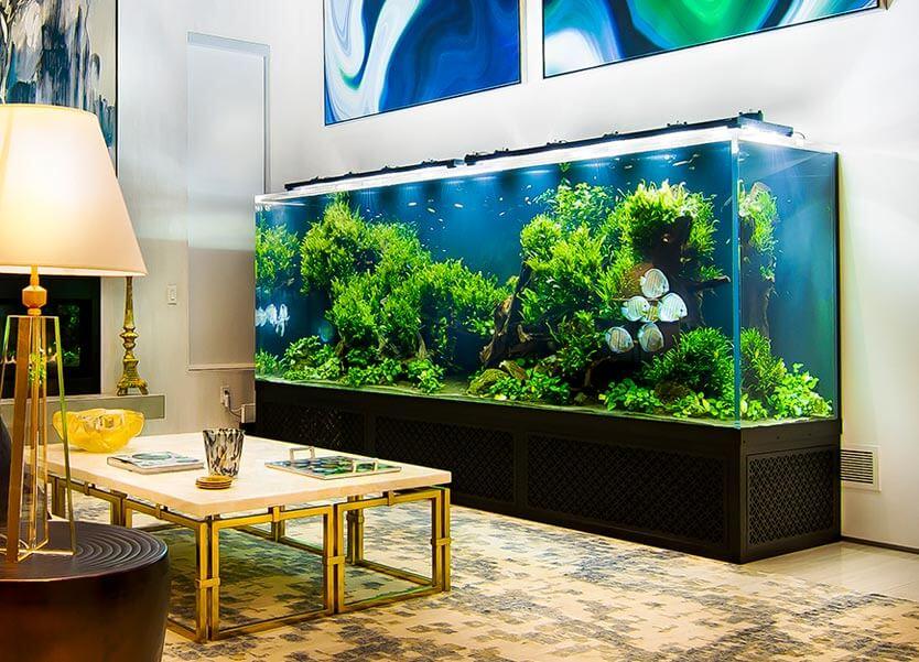 Aquarium Management