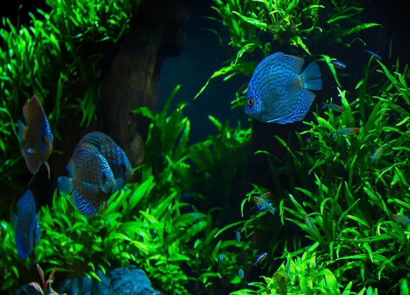 Aquarium Management Services